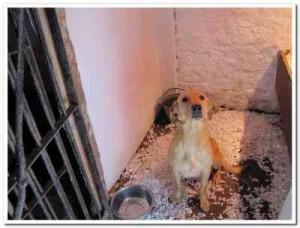 Jagden Falcon having recently pupped.